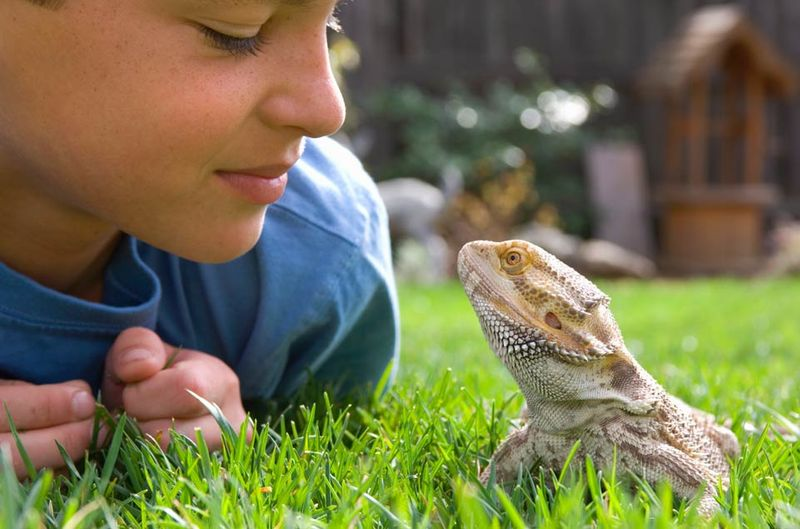 child and lizard